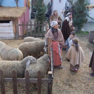 80 uomini e pecore